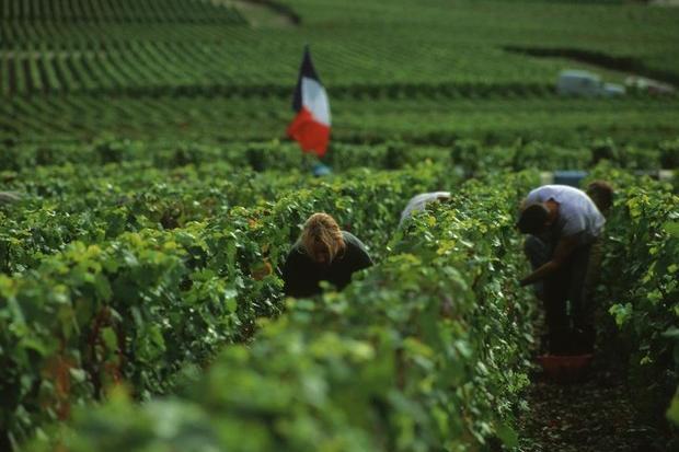 Rivoluzione Champagne, la guerra intestina per le bolle francesi