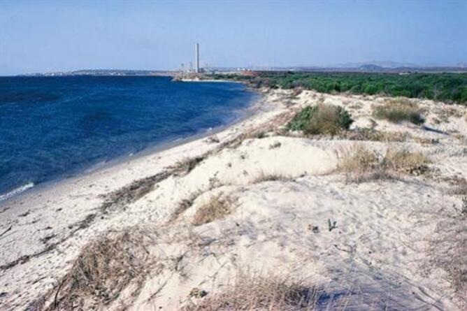 Spiaggia di Punta deS'Aliga, sabbia bianca finissima e conchiglie