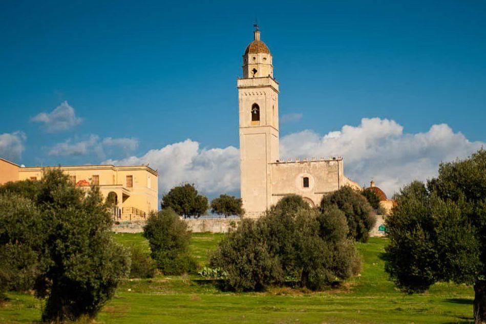 Settimo, il comune concede la raccolta delle olive nei suoi oliveti