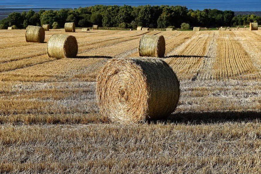 Schiacciato dalle balle di fienoAgricoltore muore a Sassari