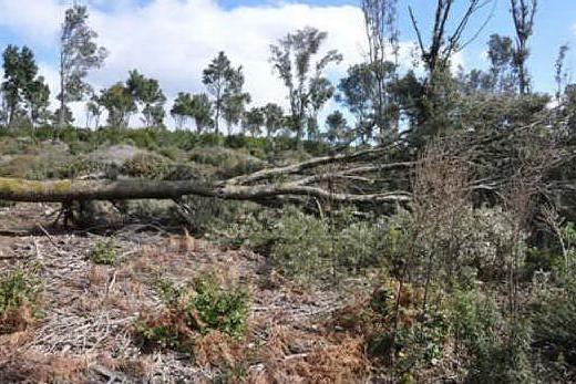 Il versante domusnovese della foresta interessato dai tagli (foto Simone Farris)