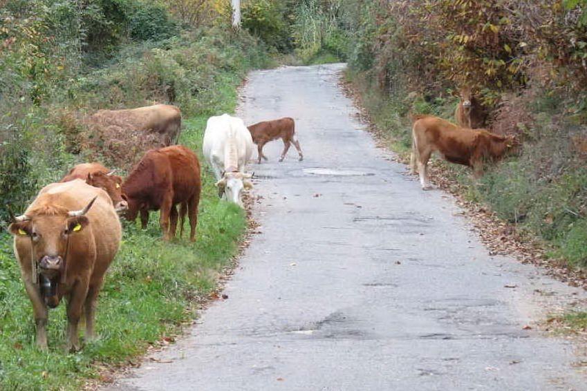 """Le \""""vacche sacre\"""" dei clan"""