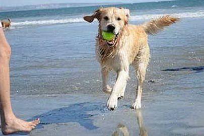 San Vero Milis, ecco la spiaggia per i cani: tante le regole da rispettare