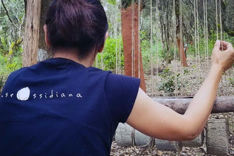 A Pau i telai per far rivivere i boschi dell'ossidiana