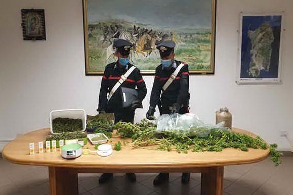 In casa ha una piantagione di cannabis: 44enne arrestato a Olbia