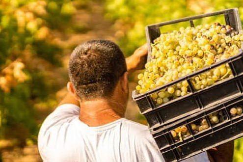 Premio del Gambero Rosso al vino pregiato Bovale di Serdiana