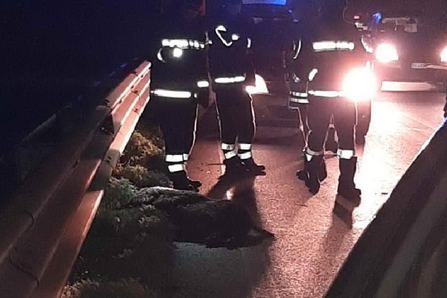 Porto Torres, spaventoso scontro con un cinghiale: auto distrutta