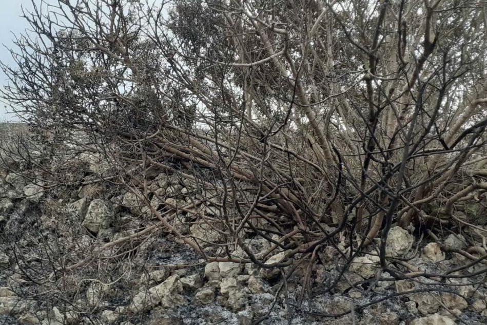 Uri, le desolanti immagini dopo l'incendio
