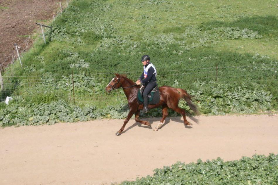 Equitazione, la Sardegna Endurance Cup a Tanca Regia