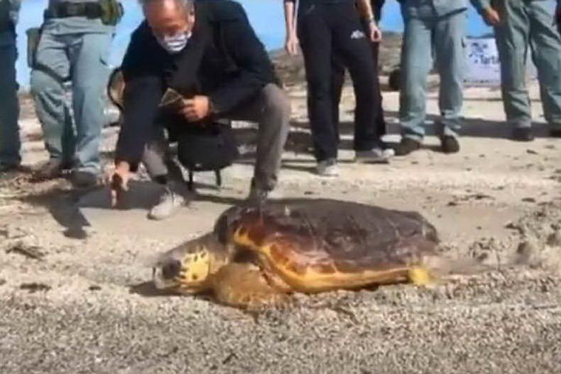 Asinara, la tartaruga Hope riprende il largo