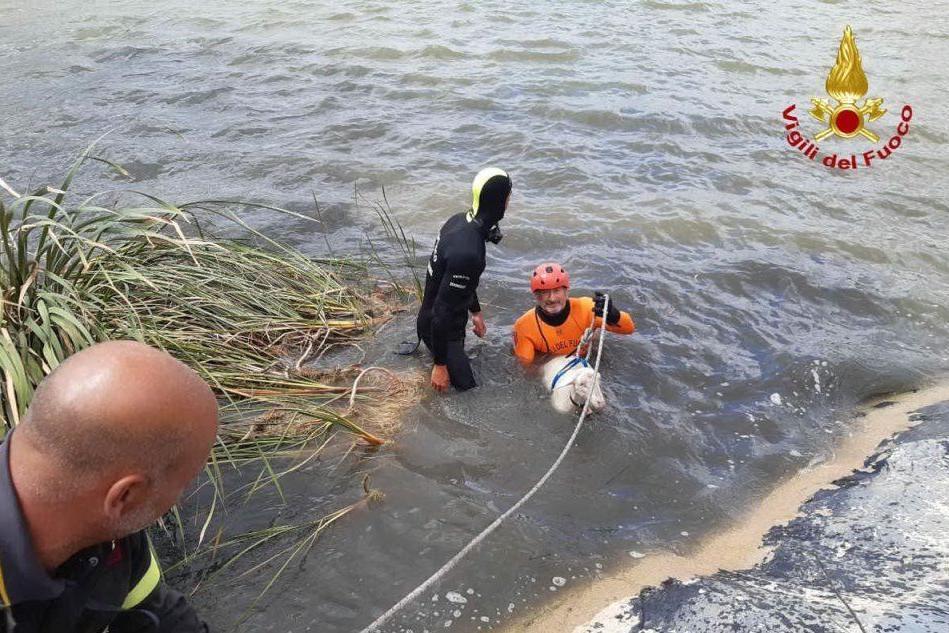 Le operazioni di salvataggio (foto Vigili del fuoco)