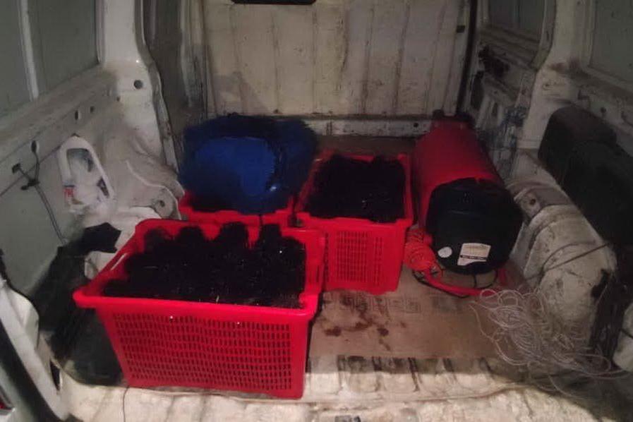 Bosa, nel furgone 700 ricci di mare ancora vivi