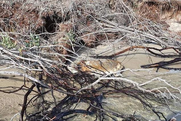 Sulcis, nuovo avvistamento di una tartaruga marina morta