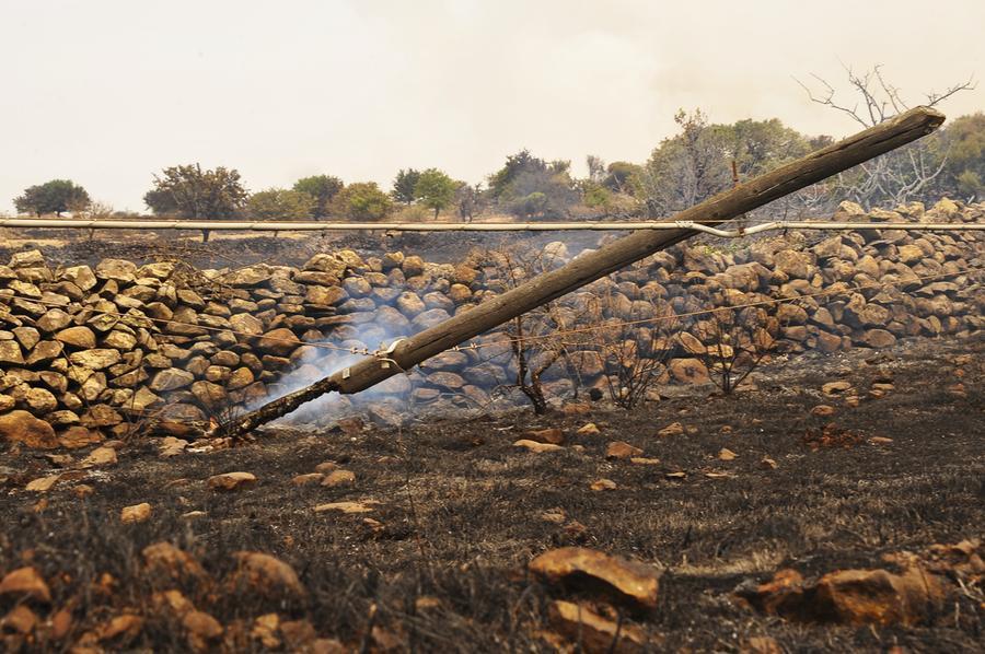 Coldiretti: per ricostruire i boschi andati in cenere serviranno fino a 15 anni - L'Unione Sarda.it