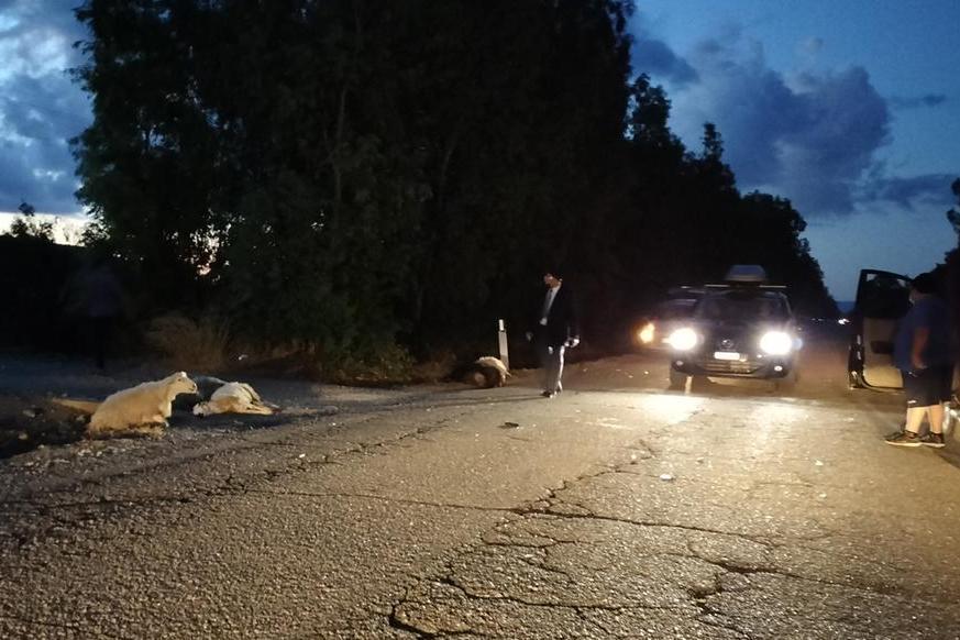 Incidente sulla provinciale per Porto Pino: gregge travolto da un'auto