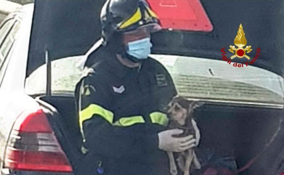 Il cagnolino tratto in salvo (foto vigili del fuoco di Cagliari)