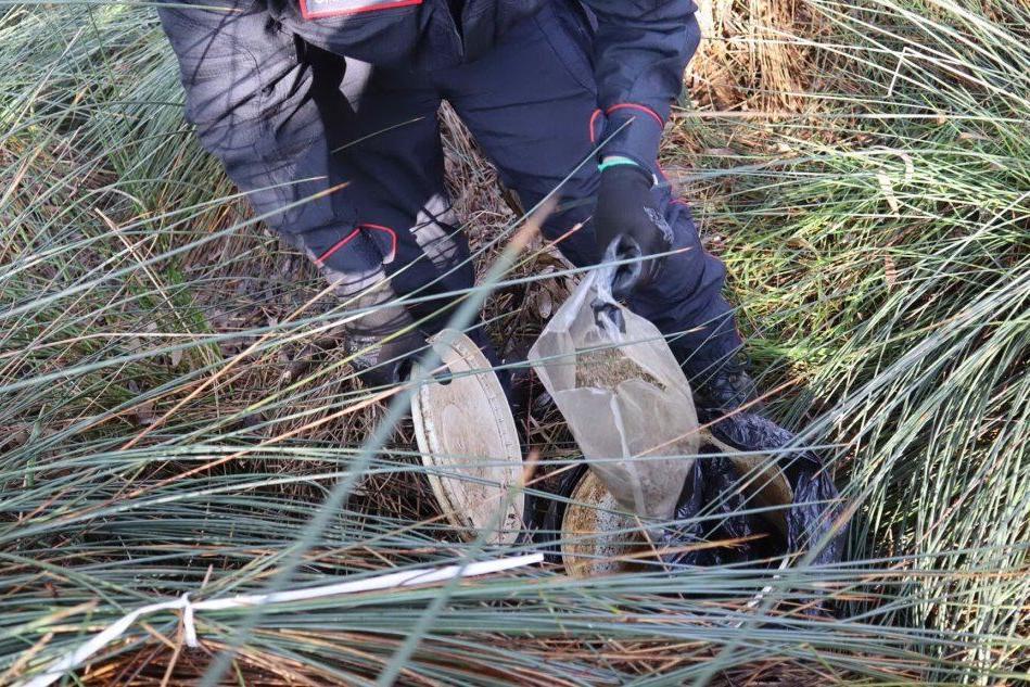 Droga sequestrata nelle campagne di Lotzorai