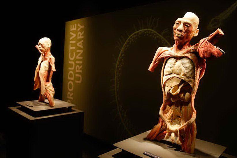 """""""Bodies, The Exhibition"""", il corpo umano in mostra a Cagliari"""