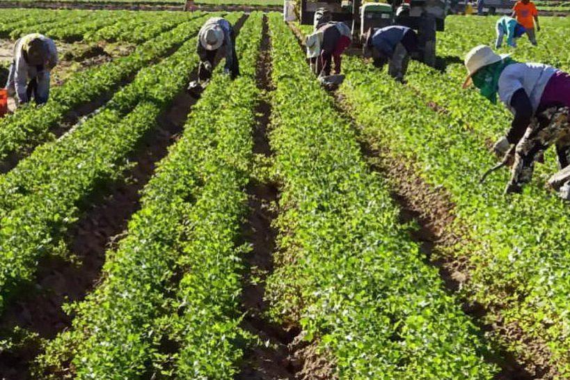 Extracomunitari sfruttati in agricoltura: 7 arresti