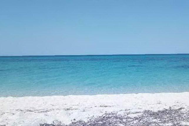 Fiume Santo, tratto di spiaggia adibito agli amici a quattro zampe