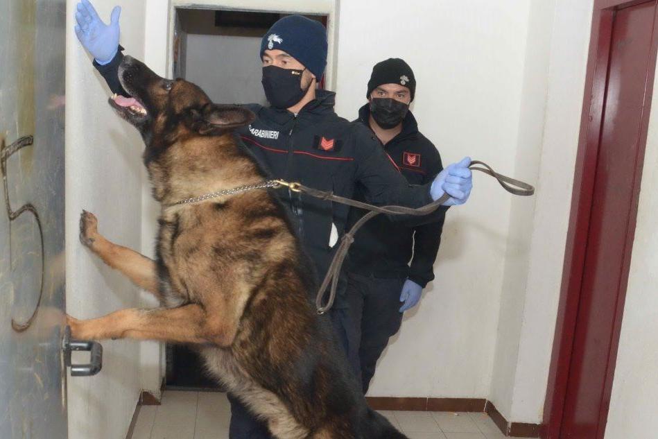 Cagliari: sotto sequestro vari tipi di droga, anche shaboo