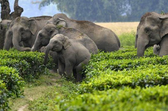 Fulmine fa strage di elefanti, 18 pachidermi uccisi durante una tempesta