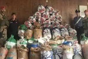 Silanus: sequestrati 410 chili di marijuana