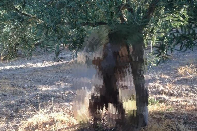 Cani impiccati all'albero: a Sorso proseguono le indagini