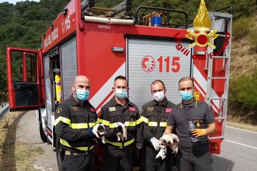 I cuccioli salvati (foto Vigili del fuoco)