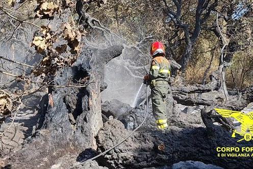 Incendio a Luogosanto, due elicotteri in volo