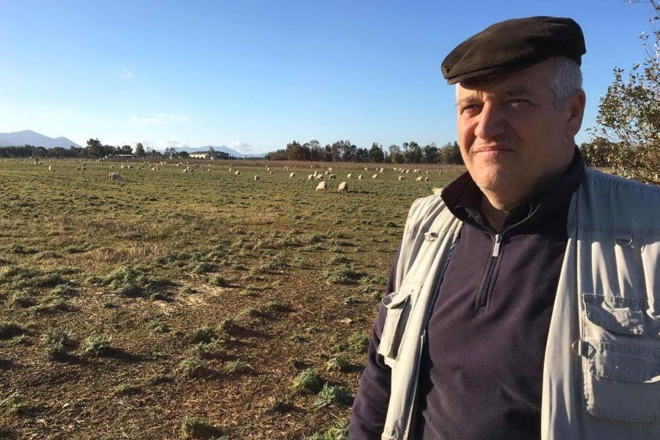 """I pastori sardi: """"Il latte non va gettato, un gesto vergognoso"""""""