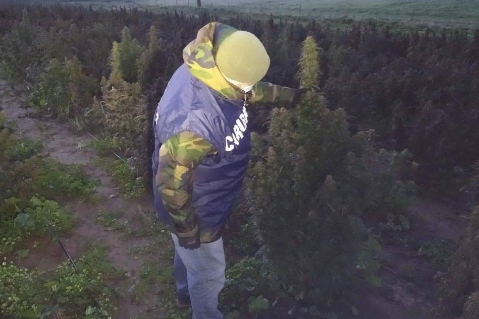 Oltre 5mila piante di marijuana, arrestato 21enne a Oliena