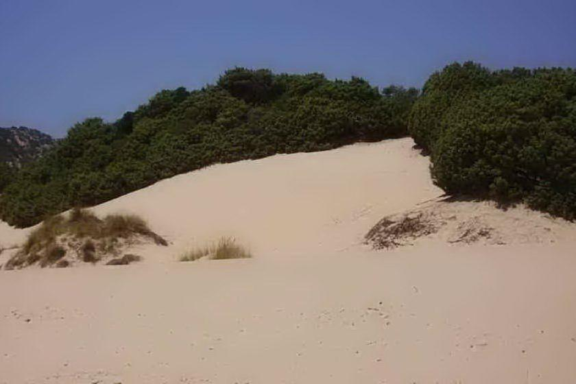 Le dune di Chia (archivio L'Unione Sarda)
