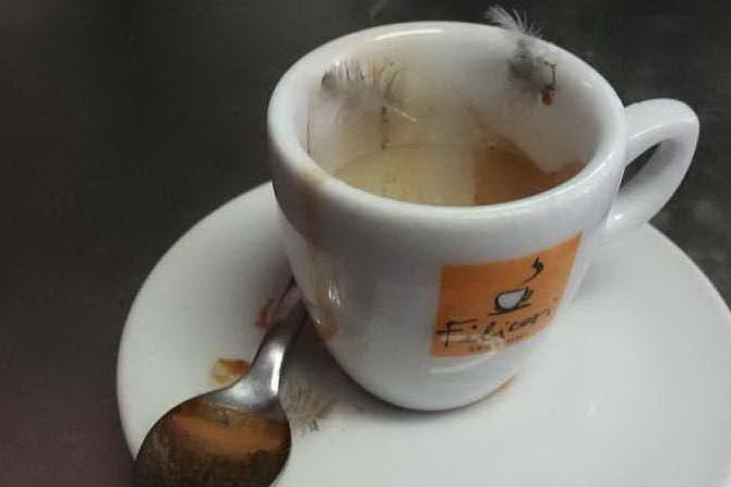 Serramanna: uccelli invadenti, piume anche dentro il caffè