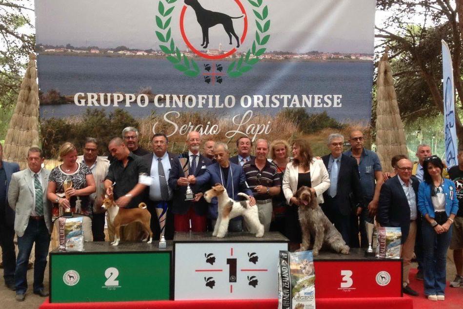 Santa Giusta: via alla mostra internazionale canina della Sardegna