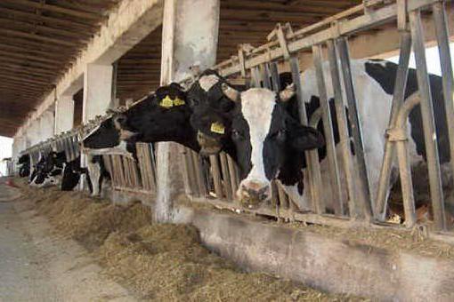 Carni rosse e insaccati sono cancerogeni? Un convegno a Sassari per fare chiarezza
