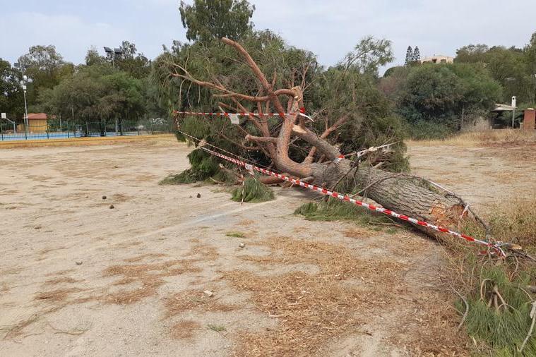 Torre delle Stelle, abbattuto un pino con la motosega: indaga la polizia locale