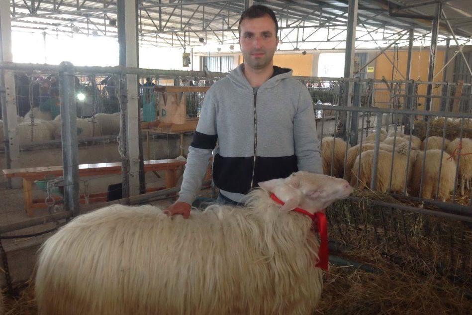 Macomer: Mauro Scintu è il vincitore della mostra interregionale ovini