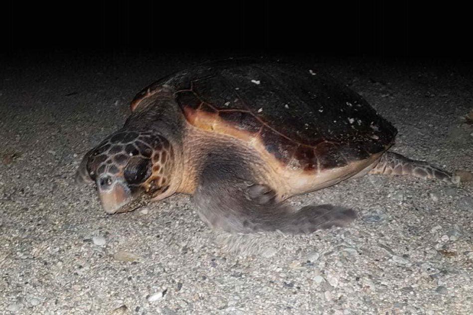 La tartaruga (foto Emilio Paolo Picciau)