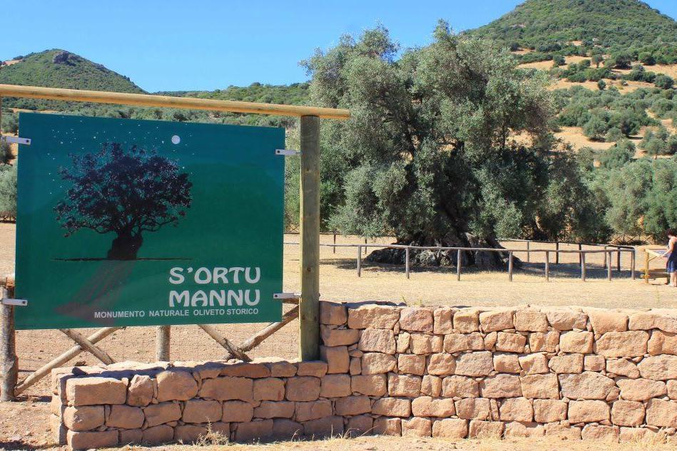 Grandi nomi alla Sagra delle Olive di S'Ortu Mannu