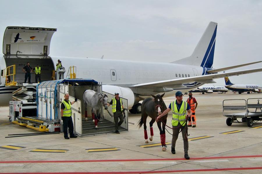 Arborea, arrivano i cavalli dell'Emiro: al via i mondiali di Endurance