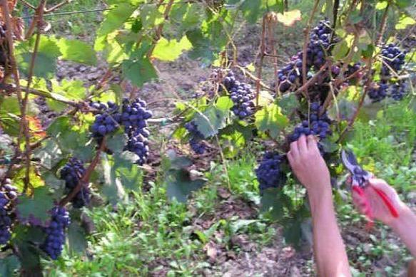 Sabato sera degustazione gratuita di vini alla Cantina Trexenta di Senorbì