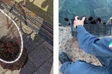 Prende ricci all'Isola Rossa: pescatore nei guai