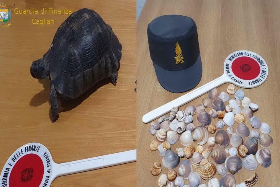 Cagliari, dai bagagli dei turisti spunta di tutto: conchiglie, sabbia e persino una tartaruga
