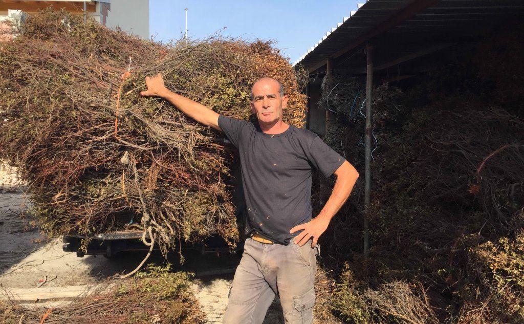 Piero Cinus, 50 anni, raccoglitore di fascine di cisto (L'Unione Sarda - Paone)