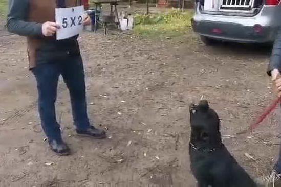 """Max, il cane matematico del """"Working dog Sardinia"""" di Elmas"""