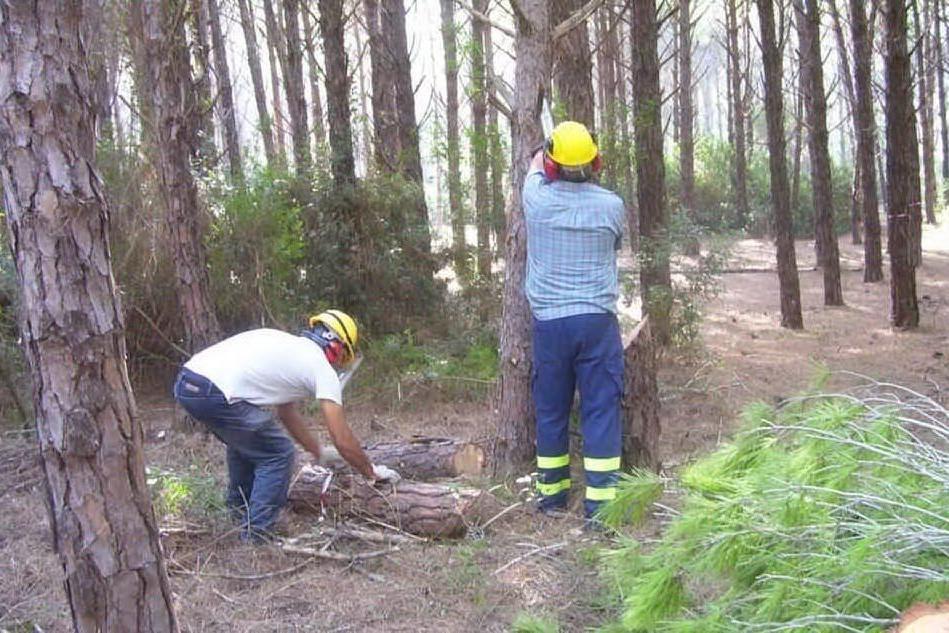 Forestazione, arrivano 45mila euro per 31 comuni sardi