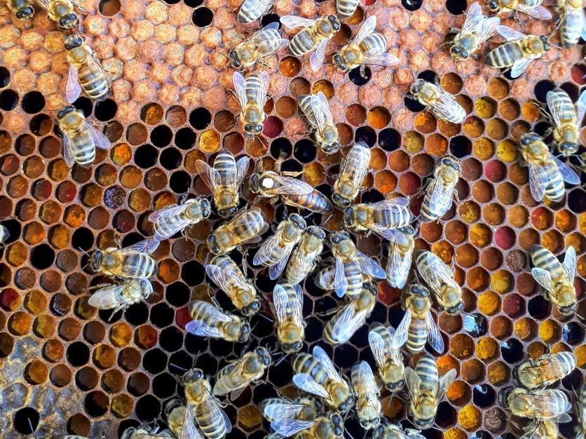 Vino, api e grano: nuove risorse dalla Regione Sardegna