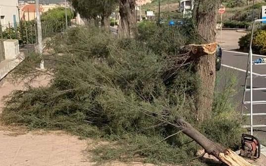 Un albero sradicato nella frazione di Lu Bagnu (foto Tellini)