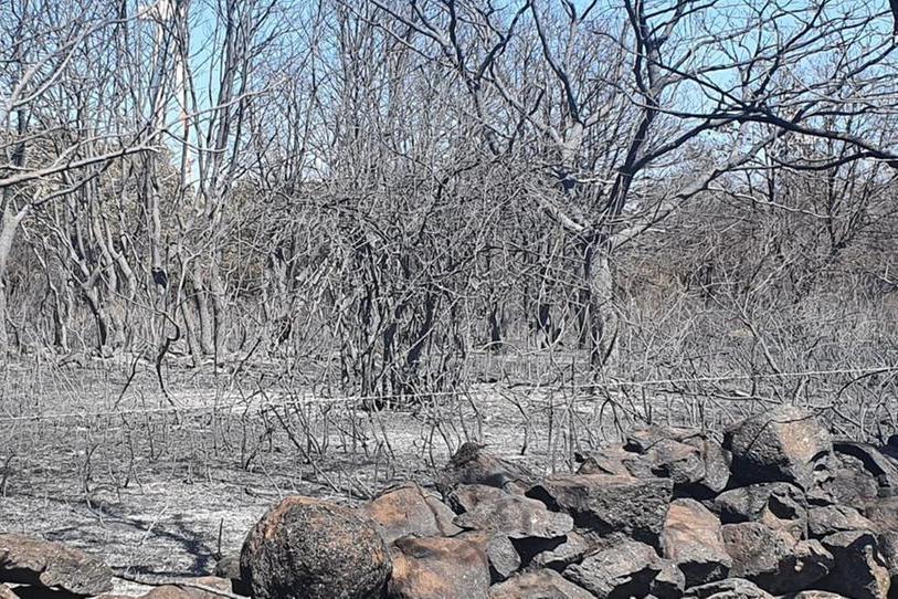 Le campagne di Bonorva dopo il rogo (foto Tellini)